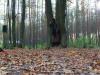 koncert-w-lesie-019-jpg
