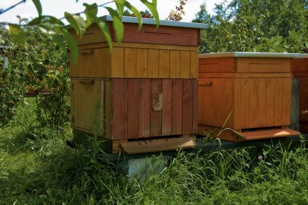 pszczoly05