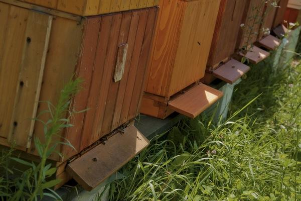 pszczoly08