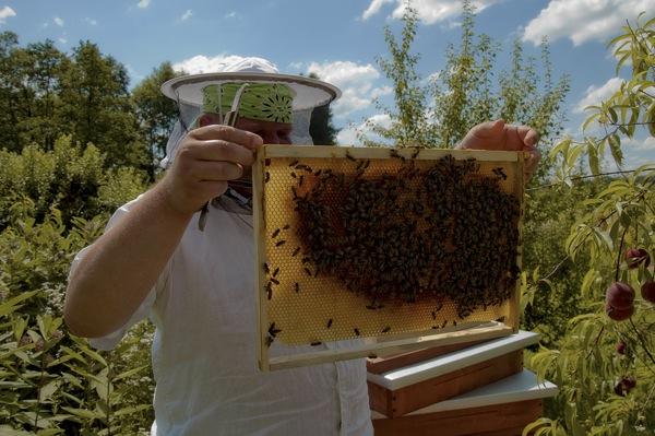 pszczoly12