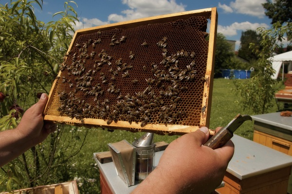 pszczoly14