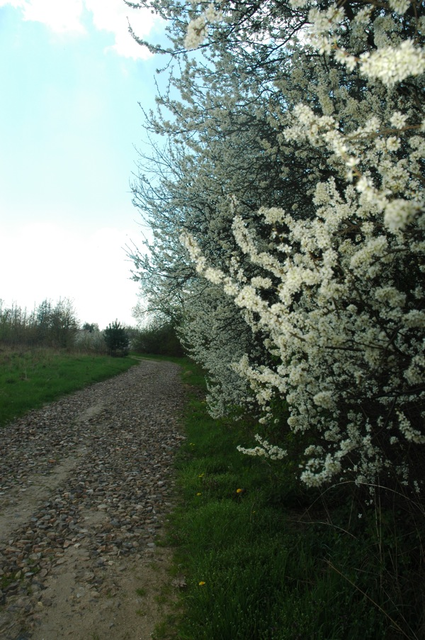 Prace Duze Wiosna 1