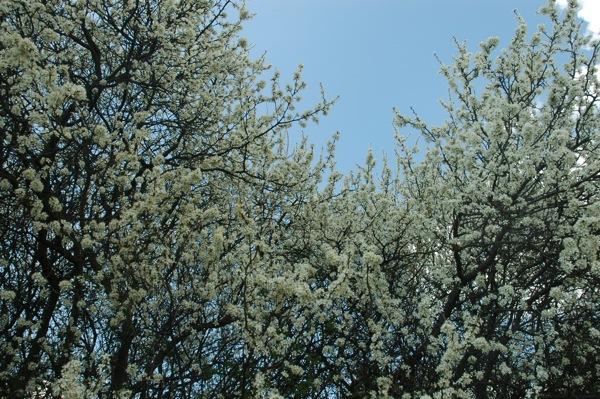 Prace Duze Wiosna 3