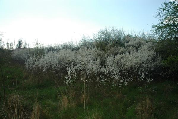 Prace Duze Wiosna 4