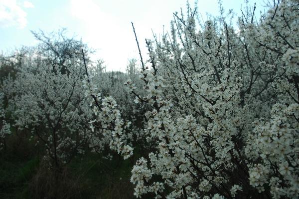 Prace Duze Wiosna 5
