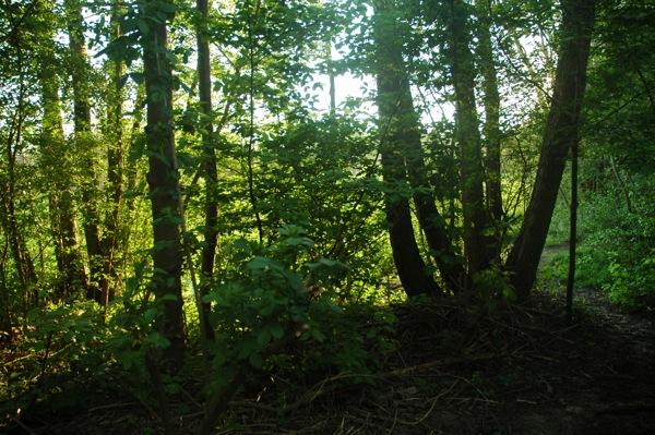 Prace Duże Las łęgowy